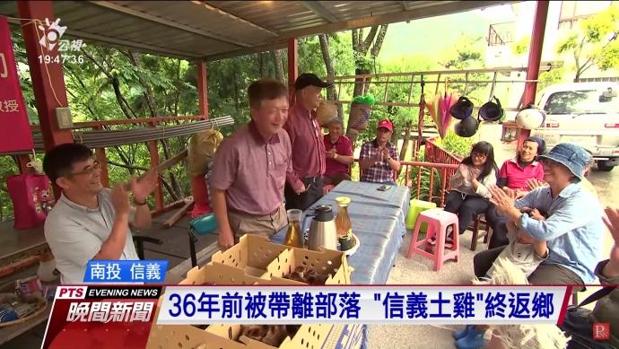 台灣土雞多元品種漸消失 興大教授致力保種