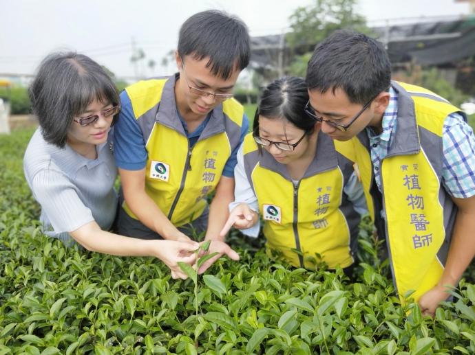興大推安全高品質友善栽培 名間「有機茶產業」風華再現