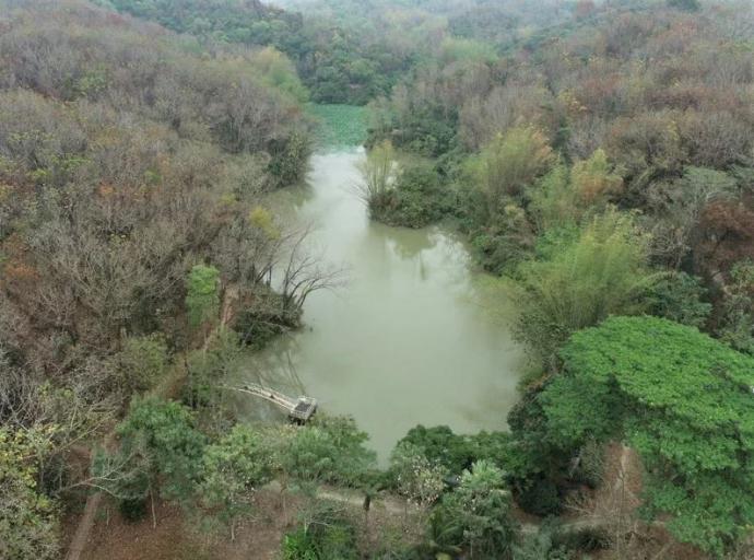 【媒體報導】樹木涵養地下水不斷 新化林場荷花開