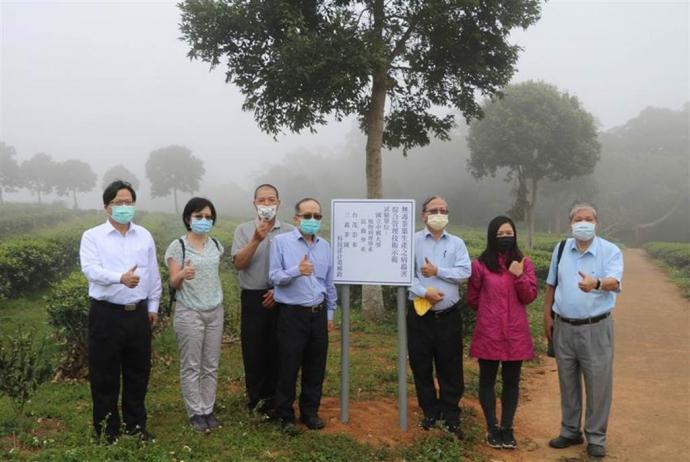 慈濟旗下三義茶園施用「枯草桿菌」益生菌 讓茶葉產量明顯提升三倍以上