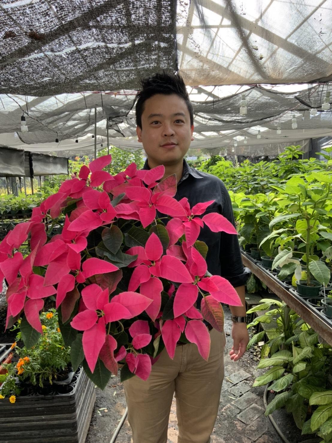 興大園藝系陳彥銘助理教授開發聖誕紅「愛神」榮獲雙項冠軍