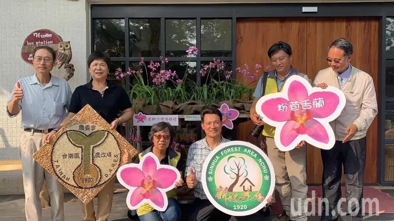 台南區農改場育成「粉苞舌蘭」,與中興大學新化林場簽訂技轉,今天起開始可以出售。記者吳淑玲/攝影