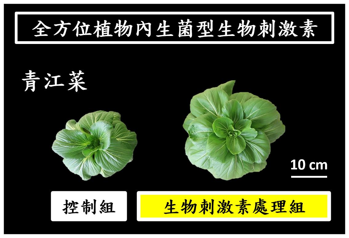 使用「全方位植物內生菌型生物刺激素」對照組