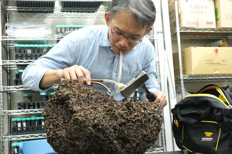 用吸管吸出蟻巢中的白蟻,李後鋒的研究工作真有趣。(攝影/楊語芸)