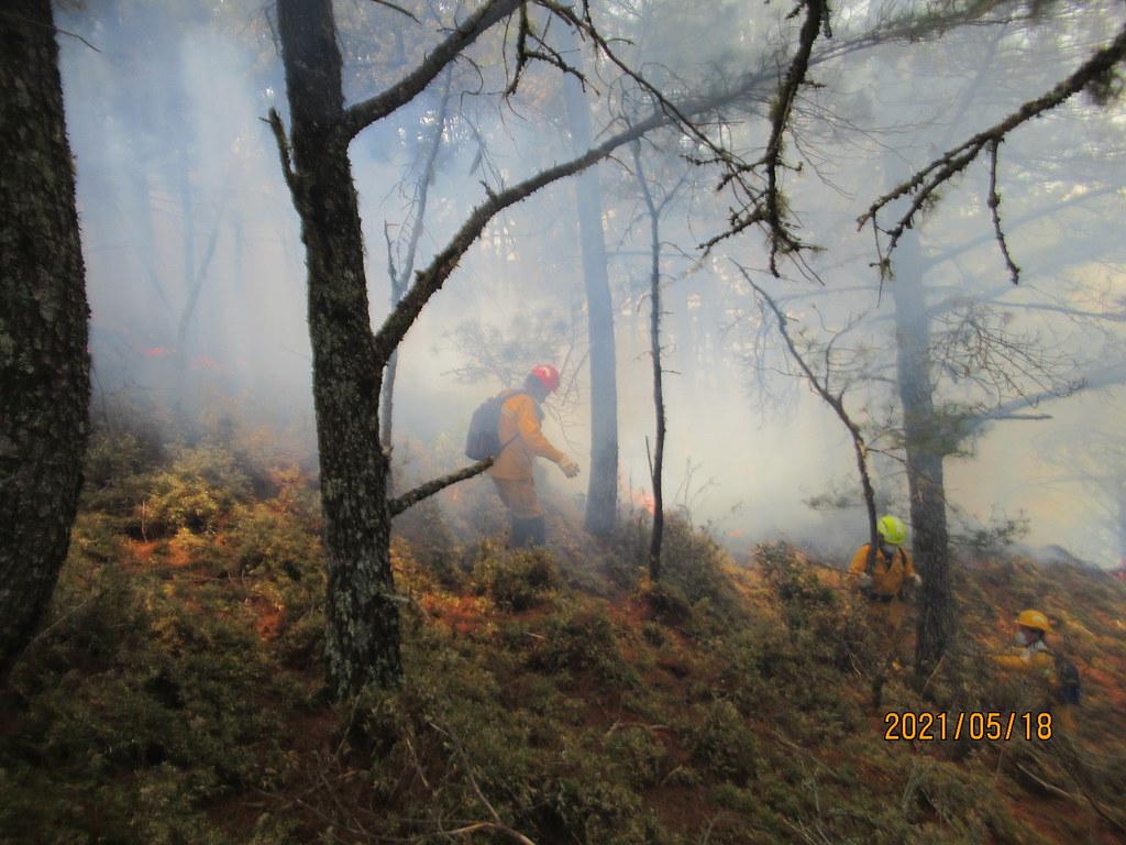 玉山森林火災。圖片來源:嘉義林管處