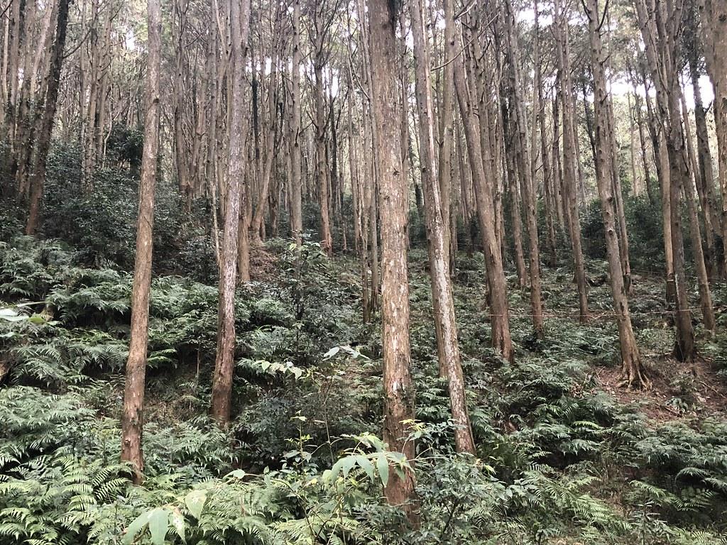 台灣40萬公頃人工林,原應發展成可永續林業,照顧山村經濟提供內需。攝影:廖靜蕙