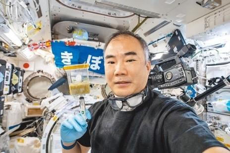 太空人野口先生負責太空種子照養 (資料來源JAXA網站)