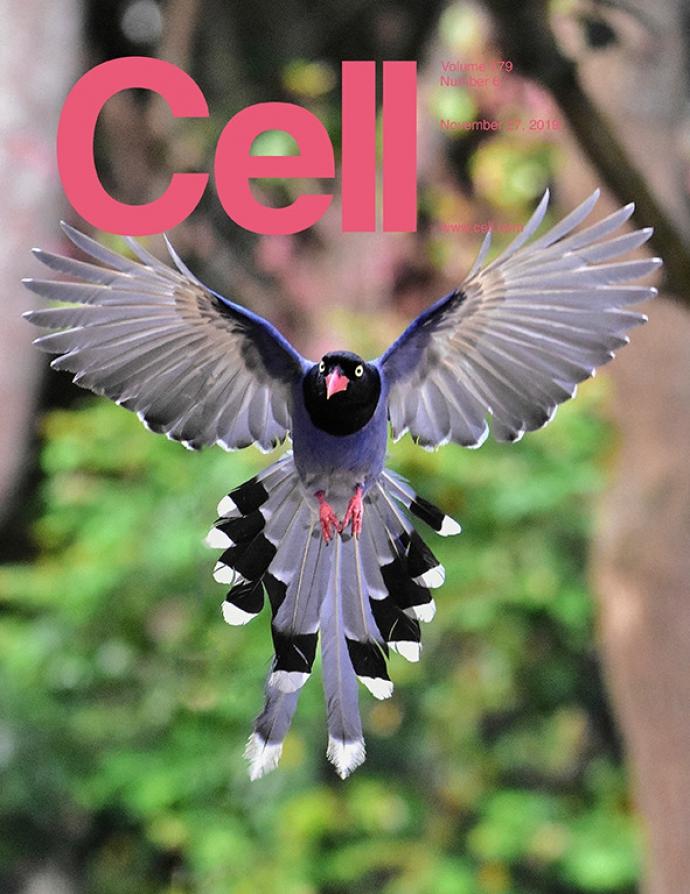 【公關組】興大跨國團隊從羽毛探討鳥類飛翔的奧祕 登頂尖期刊Cell